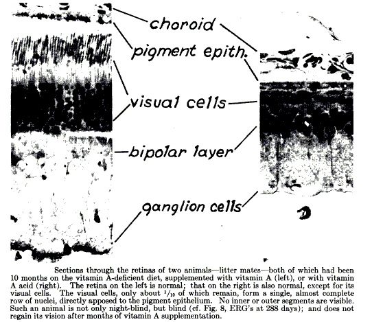 sfm dietary protocols  depleting retinol